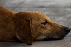 hund verletzung notfall